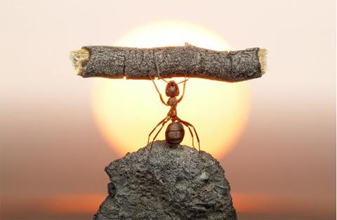 Una hormiga está subida a una piedra, y con sus brazos elevados -como de si de una pesa se tratara- sostiene un tronco. En el fondo un sol redondo, dorado. Símbolo de resistencia, de logro, de aprendizaje de la situación.