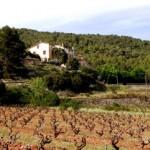 Imagen de la Masía La Manlleva con los olivos en primer plano